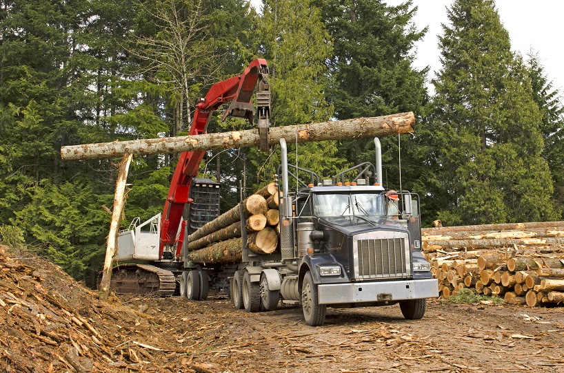 A log loader or forestry machine loads a log truck at the site landing in southern Oregon